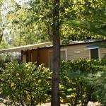 mobil-home avec terrasse couverte nature arbre domaine gil aubenas